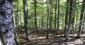 bosque de gamueta (2)