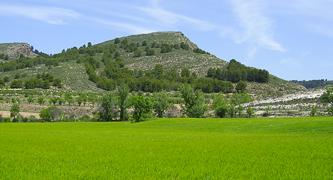 Campo de trigo verde que ilustra el medio natural