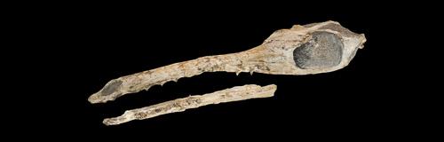 Maledictosuchus en 3D hiperrealista