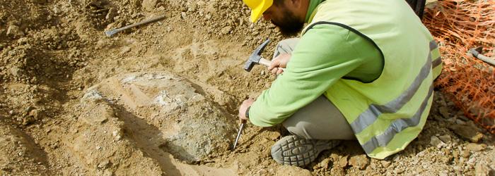 Paleontólogo excavando una tortuga fósil