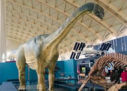 Reproducción de dinosaurio saurópodo de 20 metros de longitud