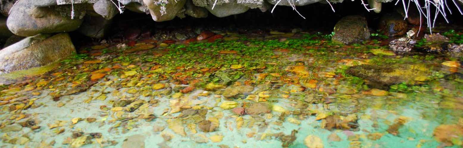 Moluscos en su medio natural