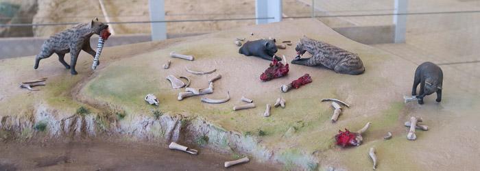Hienas modeladas en miniatura