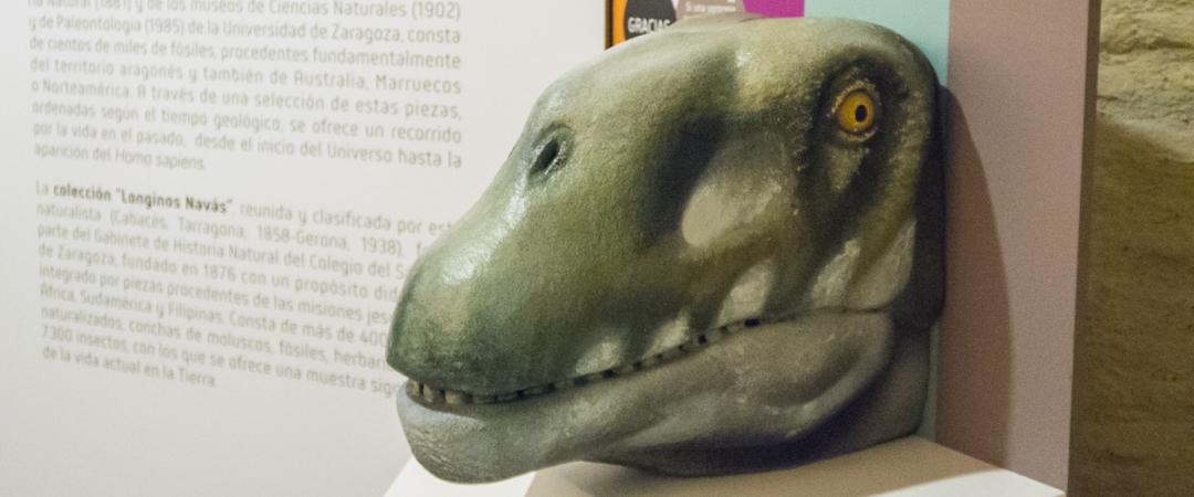Urna donativos. Museo de Ciencias Naturales – Univ. de Zaragoza