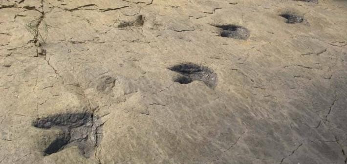 huellas-dinosaurios