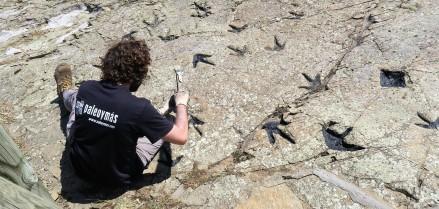 Paleontólogo tratando icnitas de dinosaurio
