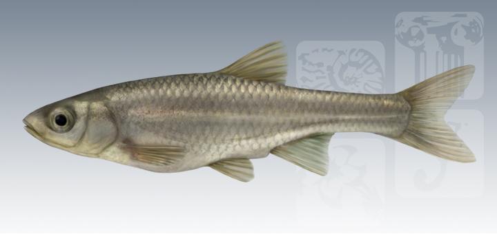 Paleoymás ha realizado ilustraciones originales de las especies