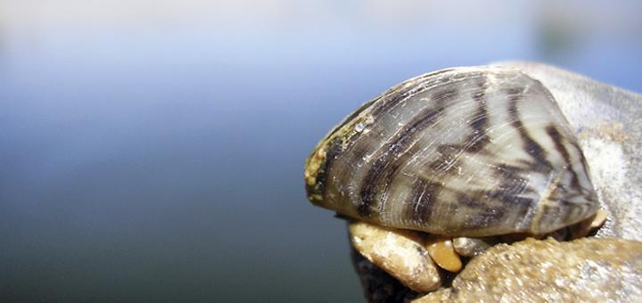 Equipo de investigación: moluscos invasores