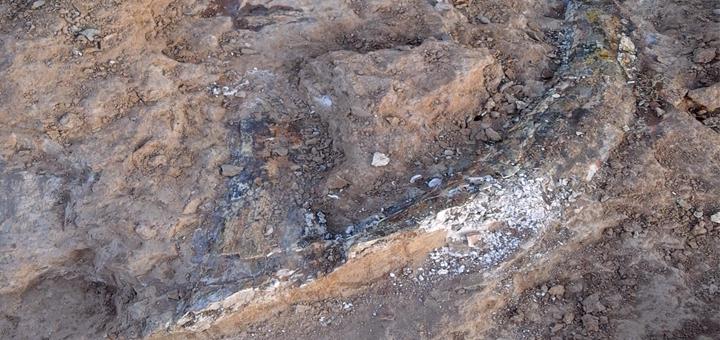 Finaliza el seguimiento paleontológico en la B-40 de Barcelona