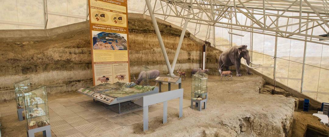 Yacimiento Paleontologico