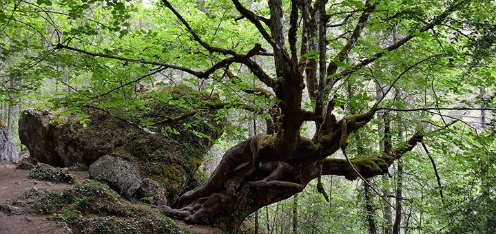 Parque-Natural-de-la-Serranía-de-Cuenca