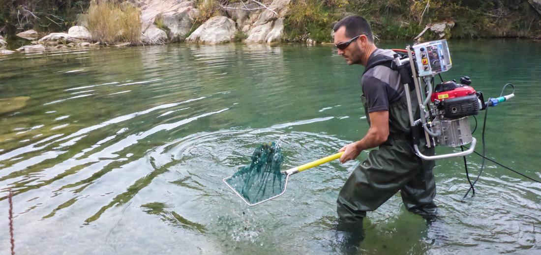 Pesca eléctrica Bergantes (2)