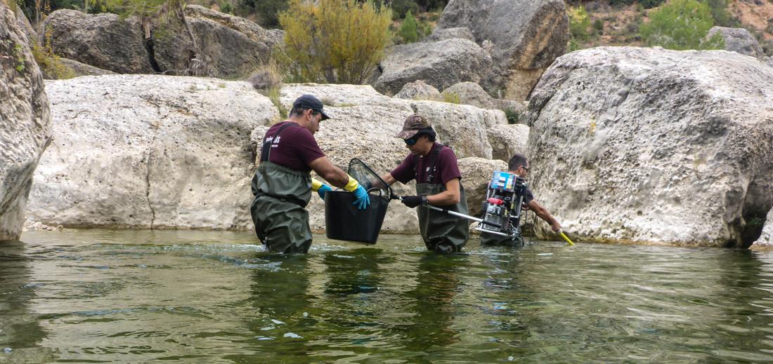 Pesca eléctrica Bergantes (4)