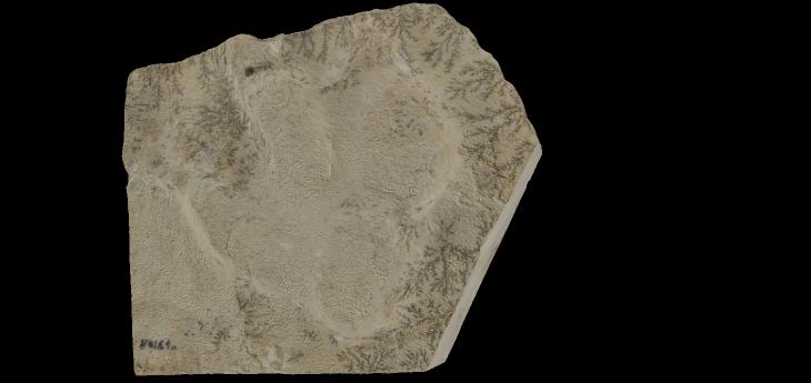 Icnita de dinosaurio ornitópodo