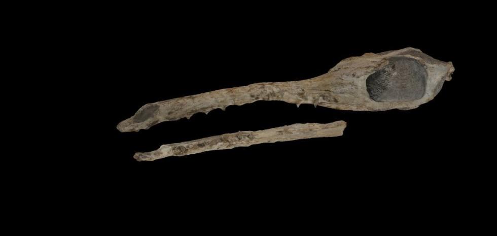 Maledictosuchus 3dpaleo