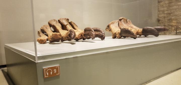 Museo de Ciencias Naturales de Zaragoza