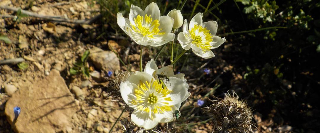 """Prospección botánica LAMT """"Formiche Alto-Formiche Bajo"""""""