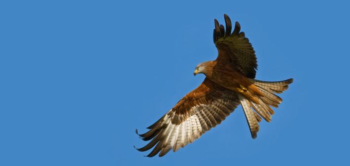 7. Aves (opción 2)
